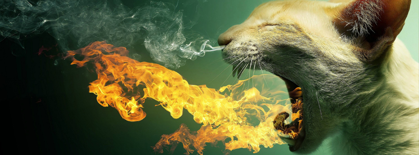 Cat Fire facebook Cover
