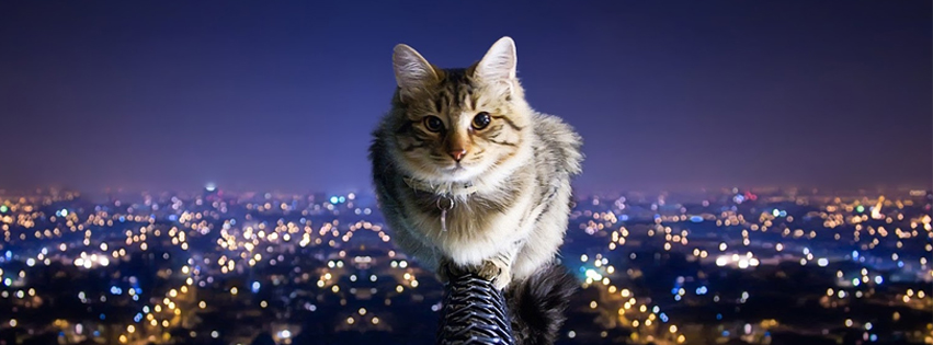 Cat In The City facebook Cover