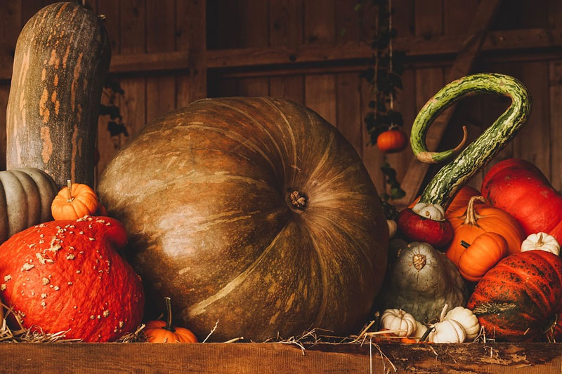 Halloween-Still-Life-Pumpkin